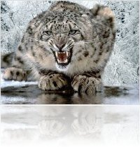 Apple : Snow Leopard compatibility - macmusic